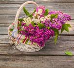 may_day_basket-thumb