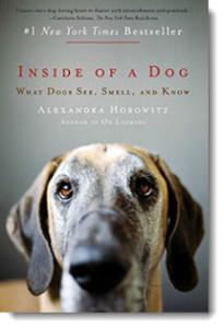 inside_dog